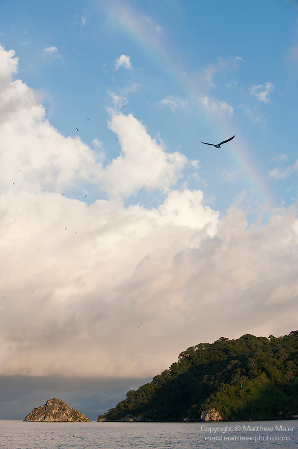 Cocos Island, Costa Rica; a Red-footed Booby (Sula sula) bird flies in the path of a rainbow over Cocos Island in the late afternoon