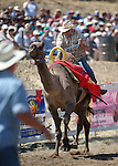 Ryan Gillaspie races in the 54th International Camel Races in Virginia City, Nev., on Friday, Sept. 6, 2013.  <br /> Photo by Cathleen Allison