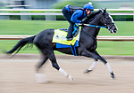 LOUISVILLE, KENTUCKY - APRIL 28: Long Range Toddy, trained by Steven Asmussen, exercises in preparation for the Kentucky Derby at Churchill Downs in Louisville, Kentucky on April 28, 2019.Scott Serio/Eclipse Sportswire/CSM