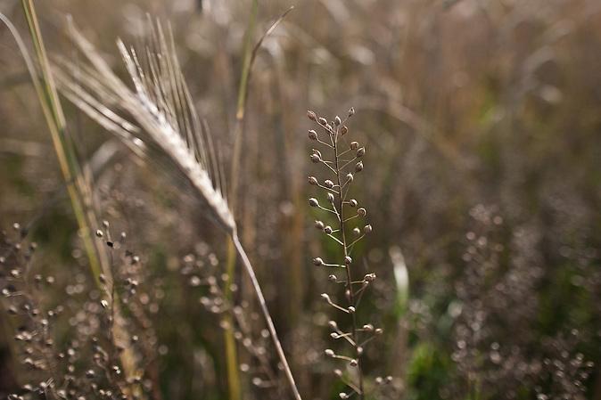 Am Fluß Narew wirtschaften verschiedene Bewohner ökologisch und innovativ. Sie schützen damit die wertvolle Flußlandschaft. Auch Getreide wird angebaut. / At the river Narew the residents work ecologically. This way they protect the river landscape. Cereals are cultivated as well.