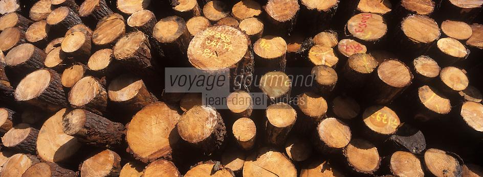 Europe/France/Aquitaine/40/Landes/ Env de  Mont-de-Marsan: Exploitation forestière dans la forêt landaise