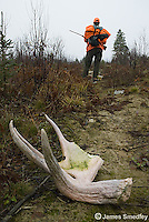 Fallen moose antler with hunter in background