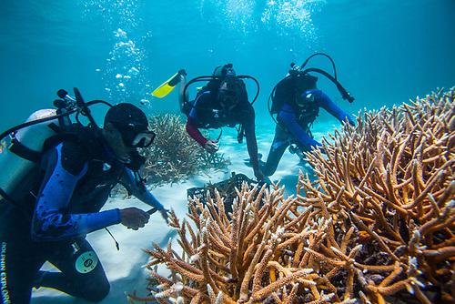 """""""Hace cinco años debido al crecimiento del programa de restauración de corales necesitábamos más personal. La restauración de coral requiere manos de obras trabajando en viveros sub-marinos, un trabajo manual que no requiere mucha experiencia técnica sino práctica bajo el agua"""""""