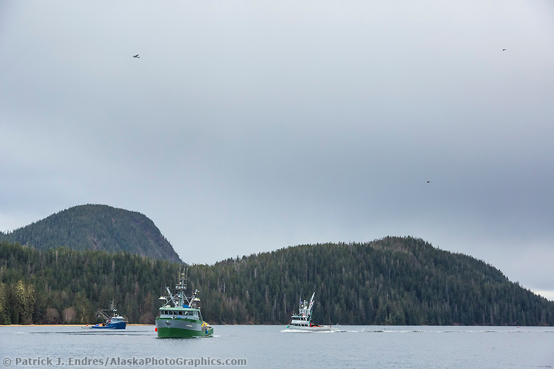 Airplanes offer information to commercial fisherman about the location of pacific herring during the Sitka sac roe herring fishery.