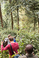 A group of people trekking through Nyungwe National Park, Rwanda