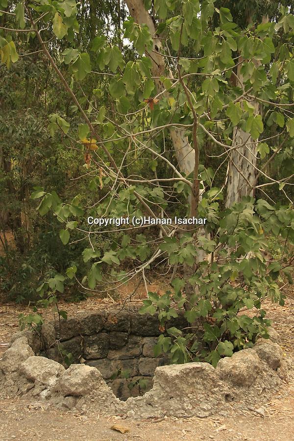 Israel, Shephelah, the Deep Well in Hulda forest