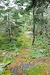 Trail on Burnt Jaket Mountain.