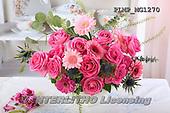 Marek, FLOWERS, BLUMEN, FLORES, photos+++++,PLMPMG1270,#f# roses