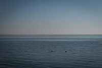 Two birds float on water that stretches into an uninterrupted horizon.