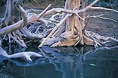 forêt noyée - parc de la rivière bleue