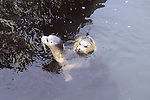 Harbor seal pups