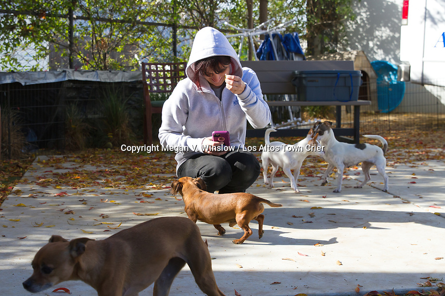 Pets In Need Adoption Specialist Kelby Poppe snaps shots of pups during playtime for the organization's website.