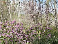 Judy's garden
