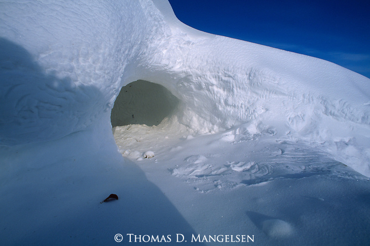 A polar bear den in a snow bank at Hudson Bay in Manitoba, Canada.