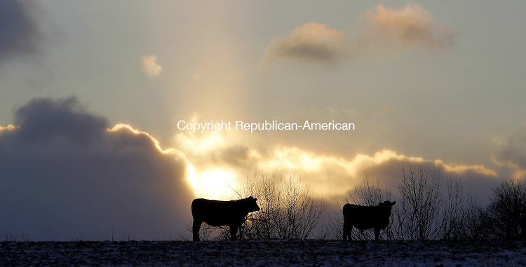 Litchfield, CT- 06, December 2010-120610CM03 Cattle are silhouetted against a setting sun at Long Ridge Farm in Litchfield Monday afternoon.  According to the National Weather Service, the cold weather continues today with a high near 32F.  Christopher Massa Republican-American
