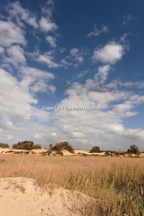 Israel, Southern Coastal Plain. The dunes at Zikim