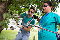 "Broderick Morrison, left, and Aaron Evans prune a tree during ""Circle the City with Service,"" the Kiwanis Circle K International's 2015 Large Scale Service Project, on Wednesday, June 24, 2015, in Indianapolis. (Photo by James Brosher)"