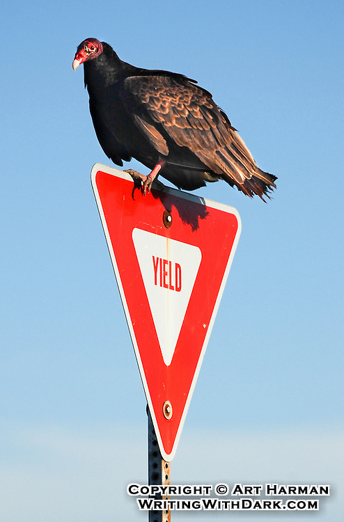 """""""Yield to Vultures"""" by Art Harman. And you should!"""