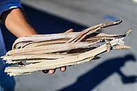 A man shows several skins, hides, skeletons and bodies of rattlesnake that he sells in Caborca, Pitiquito and Puerto Peñaco, they are used to make rattlesnake broth and traditional medicine.<br /> (Photo: Luis Gutierrez /NortePhoto.com)<br /> <br /> Un hombre muestra varias pieles, cueros, esqueletos y cuerpos de vivora de cascabel que vende en Caborca, Pitiquito y Puerto Peñaco, se usan para hacer caldo de serpiente de cascabel y medicina tradicional. <br /> (Foto: Luis Gutierrez /NortePhoto.com)