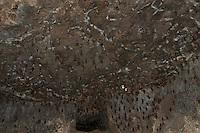 Bats in side the Labyrinth at Daulatabad Fort Aurangabad, India