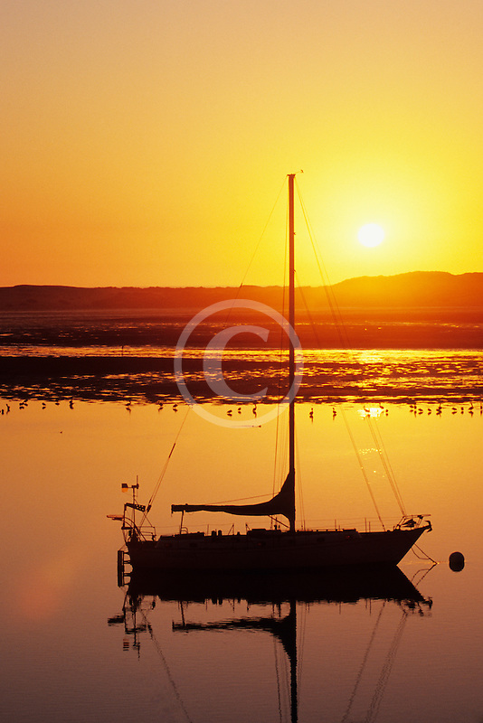 California, Morro Bay, Sailboat at sunset