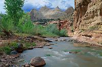 Fremont River, Fremont cottonwoods &amp;<br />   Navajo sandstone domes, Capitol Reef<br /> Capitol Reef National Park<br /> Colorado Plateau,  Utah
