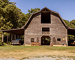 July 31, 2017. Chapel Hill, North Carolina.<br /> <br /> Rameses the Ram lives in a barn on the Hogan farm that was built around 1930. <br /> <br /> The Hogan family have long been the caretakers of Rameses the Ram. The current Rameses is the 21st in the line of the University of North Carolina's live mascot.