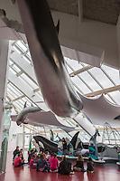 France, Bretagne, (29), Finistère, Brest: Océanopolis est un centre de culture scientifique consacré aux océans:  Classe verte