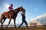 DEL MAR,CA-SEPTEMBER 03: Game Winner,ridden by Mario Gutierrez, after winning the Del Mar Futurity at Del Mar Race Track on September 3,2018 in Del Mar,California (Photo by Kaz Ishida/Eclipse Sportswire/Getty Images)