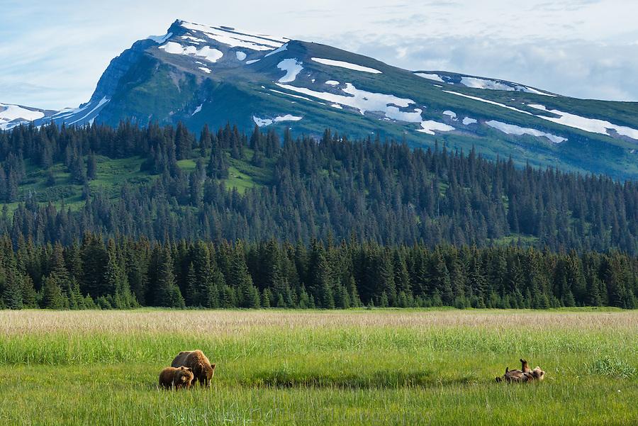 Brown bears in front of Slope Mountain, Lake Clark National Park, Alaska