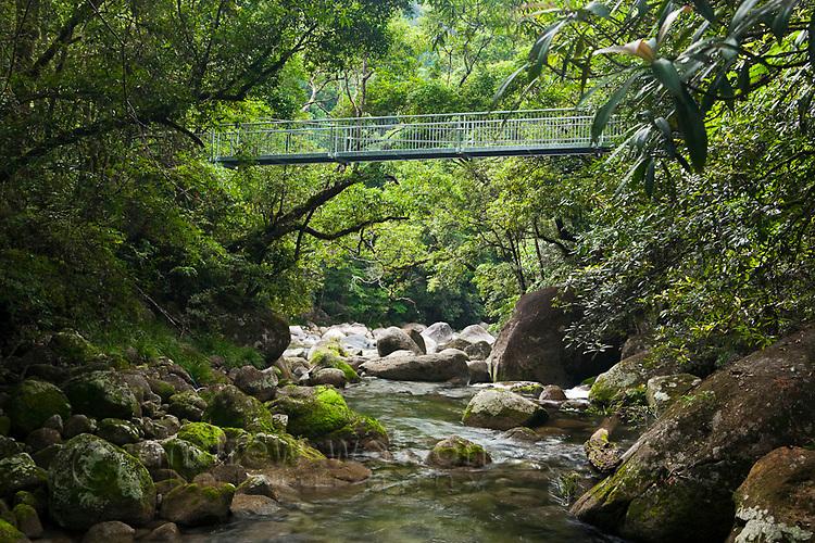 Rex Creek Suspension Bridge at Mossman Gorge.  Daintree National Park, Mossman, Queensland, Australia