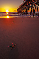 Sunset Starfish