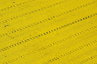 4415/Rapsfeld:DEUTSCHLAND, HAMBURG, VIER- UND MARSCHLANDE, KIRCHWERDER, 05.05.2005:Raps, Rapsfeld, alternative Energie, Feld, Landwirtschaft, Spuren im Rapsfeld Strucktur, Muster,  Luftbild, Luftaufnahme, ..