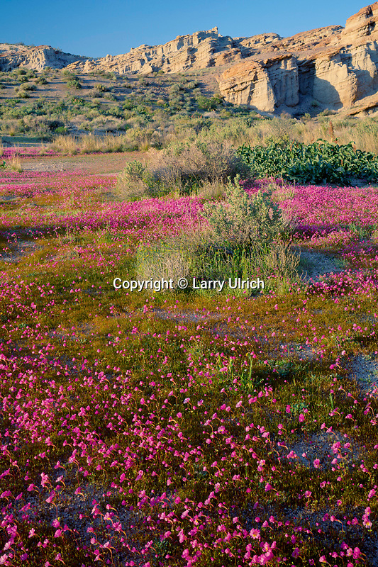 Palmer's monkeyflower<br /> Red Rock Canyon<br /> Red Rock Canyon State Park<br /> Mojave Desert,  California
