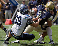 Maine defensive lineman Michael Cole sacks Pitt quarterback Tino Sunseri.. The Pitt Panthers beat the Maine Black Bears 35-29 at Heinz Field, Pittsburgh, PA on September 10, 2011.