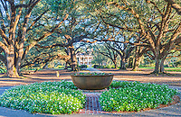 Another view of the mansion at Oak Alley this is the other side and it give a very impressive with all these wonderful old oaks creating a path to the big house on the plantaion. I thought this planter was a good focal point along the path to the mansion. as the morning light lighten highlights the trees from the northern side of the Mansion in Louisiana.