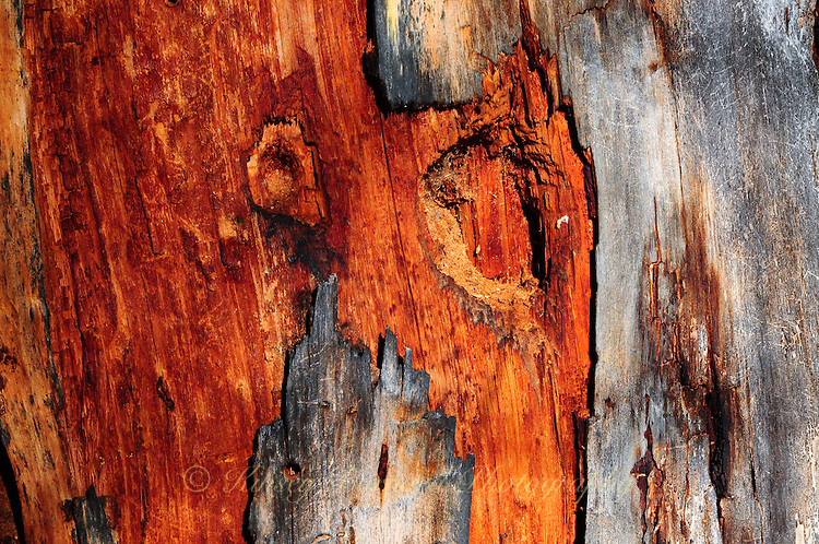 Wounded tree trunk makes for special natural designs.