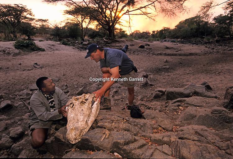 7056, New Hominids, Crocodile, Tooth, fossil, Olduvai, Gorge, Rob Blumenschine, Jackson Njau