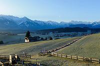 Bergwiesen bei Ofterschwang im Allg&auml;u, Bayern, Deutschland<br /> mountain pasture near Ofterschwang , Allg&auml;u, Bavaria, Germany