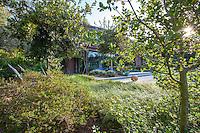 Native trees and shrubs, Coyote House, SITES® residential home with sustainable garden Santa Barbara California, Susan Van Atta design