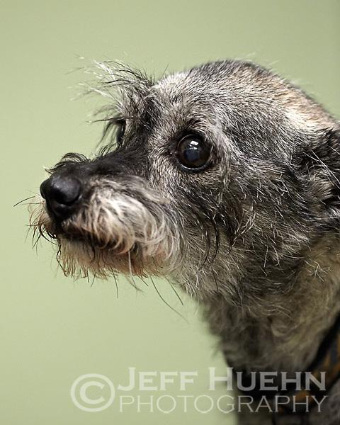SAN ANTONIO, TX - August 28, 2010: Boerne Stage Veterinary Clinic Open House Pet Portraits. (Photo by Jeff Huehn)