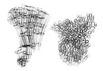 X-ray image of organ pipe coral (black on white) by Jim Wehtje, specialist in x-ray art and design images.