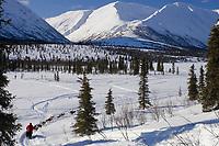 Ramey Smyths team mushes down embankment to Puntilla Lake outside Rainy Pass Chkpt 2006 Iditarod AK