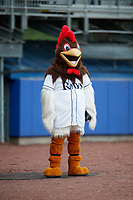 Roscoe, the Princeton Rays' Rooster before the second game of a doubleheader against the Greeneville Reds on July 25, 2018 at Hunnicutt Field in Princeton, West Virginia.  Greeneville defeated Princeton 8-7.  (Mike Janes/Four Seam Images)