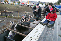 4/10/2010. Horse dealer's load up their truck at the end of the day at the Ballinasloe Horse Fair, Ballinasloe, County Galway, Ireland. Picture James Horan