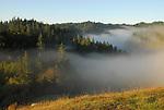 Morning fog near Forestville