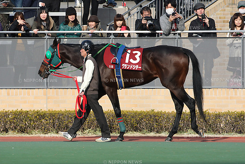 Grand City,<br /> JANUARY 25, 2015 - Horse Racing :<br /> Grand City is led through the paddock before the Tokai TV Hai Tokai Stakes at Chukyo Racecourse in Aichi, Japan. (Photo by Eiichi Yamane/AFLO)