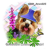 Howard, REALISTIC ANIMALS, REALISTISCHE TIERE, ANIMALES REALISTICOS, paintings+++++Yorkshire terrier,GBHRPROV225,#a#, EVERYDAY ,selfies