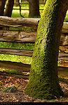 Moss on Tree beside split-rail fence in Spring, Eastern Approach Trail to Lower Yosemite Fall, Yosemite National Park