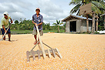 "A man dries corn in the sun in Nalapaan, one of seven villages near Pikit which has declared itself a ""space for peace."" An initiative of the Immaculate Conception Parish in Pikit, the spaces for peace are villages where residents have told both the Moro Islamic Liberation Front and the Philippine military to desist from activity within the community. Residents also studied peacebuilding and conflict resolution,  and have made special efforts to increase interfaith dialogue and harmony."